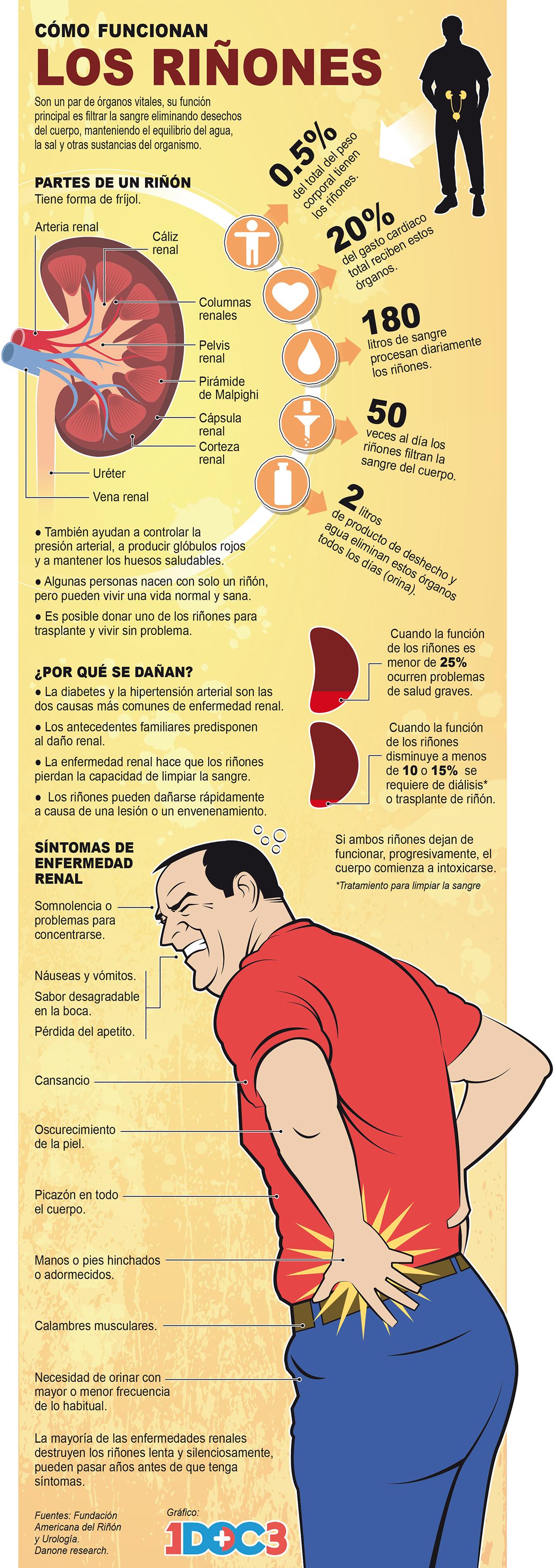 ¿Sabes cómo cuidar los riñones?